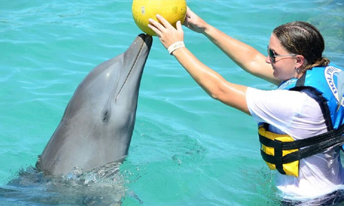 anguilla-swim-with-the-dolphins